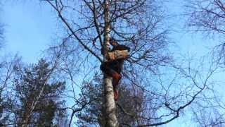 Hanging Up Birdhouse In Norway