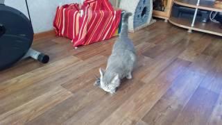 Как кошка носит котенка VID 20170520 095737