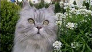 Уши, глаза, кошки. Милосердие и Мистика.