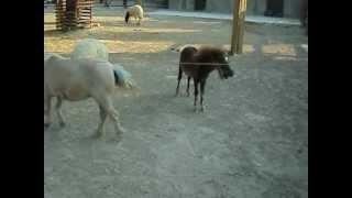 Limassol Zoo - Ponies! xxx