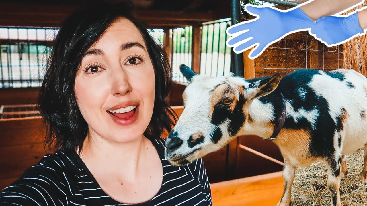 Download Here we GO!!! 😍 (getting ready for baby goats on the farm)