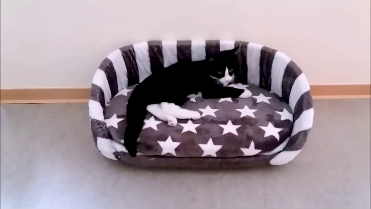 katzenbett selber machen diy cat bed youtube. Black Bedroom Furniture Sets. Home Design Ideas