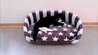 Katzenbett selber machen! DIY cat bed