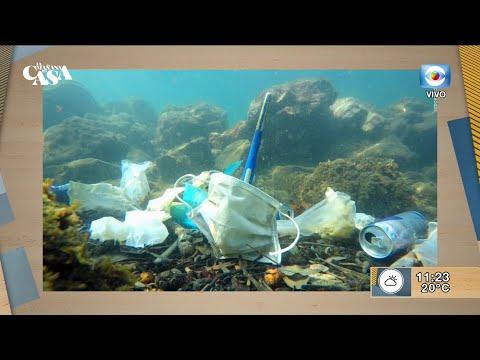 Covid-19: Preocupación de organizaciones ambientalistas