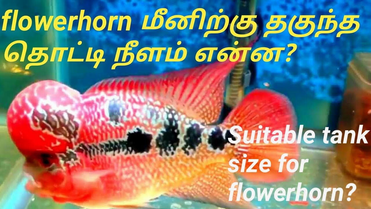 what is suitable tank size for flower horn fish tank size ? ( tamil )/ Fish  Aquarium Tamil