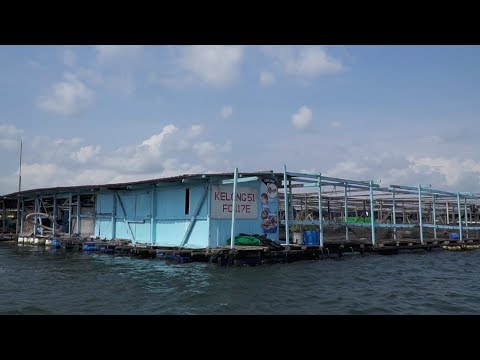 Ah Hua's Floating Farm - Singapore's Kelong