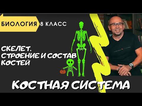 Опорная-двигательная система. Анатомия 8 класс Костная ткань. Строение и виды костей Скелет человека