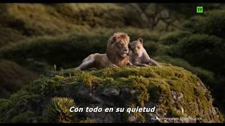 El Rey León (2019) | Anuncio: 'Es la noche del amor' | HD