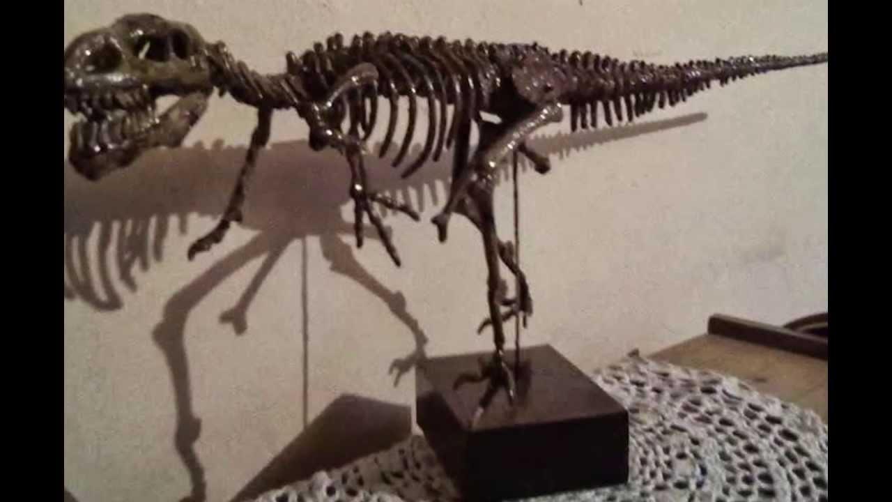 Esqueleto de Dinosaurio - YouTube