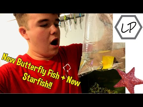 My NEW* BUTTERFLY FISH + A NEW* Starfish!