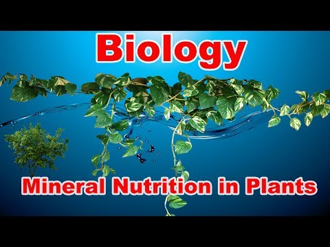 Mineral Nutrition in Plants | Biology |  By Arun Mishra | Abhi Education Classes |