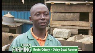 Inspiring Young Farmer thriving at dairy goat farming - Part 1