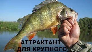 Аттрактант для ловли окуня своими руками.