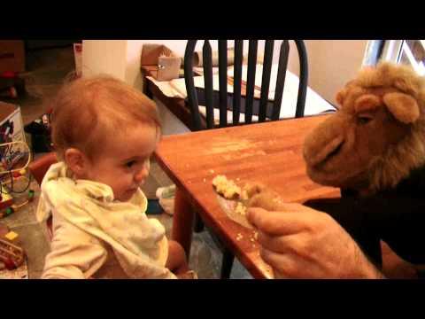 Camel Feeds Jack