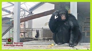 Зоопарк Шимпанзе