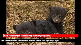 İki Yıl Boyunca Köpek Sanıp Beslediği Hayvan Asya Siyah Ayısı..