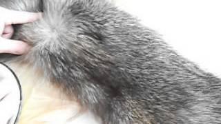 Как почистить мех из чернобурки