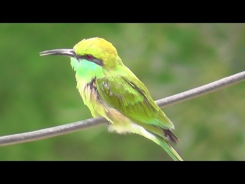 Birds of India - Compilation of my bird videos with calls - Part6