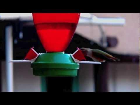 Sunrise Hummingbirds, Casa del Sol Spirituality Center, Ghost Ranch, Abiquiu, New Mexico