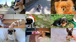 Welcome to the world of dogs! Their children or students learn the ...