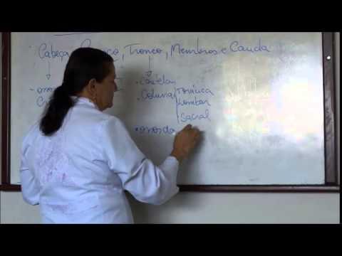 CURSO DE AUXILIAR VETERINÁRIO AULA PRÁTICA - OCP cursos de YouTube · Duração:  1 minutos 6 segundos