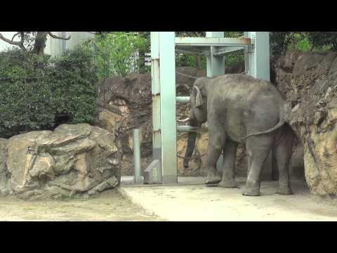 ПАНДЫ И ЗВЕРИ в зоопарке УЕНО в Токио, Япония / Ueno Zoo Panda Tokyo Japan