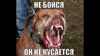 """Мемы,приколы из группы ВКонтакте/""""Не бойся он не кусается"""""""