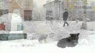 """Унисон"" (Печора зимой и...собаки. Куда же без них?). 2008 г."
