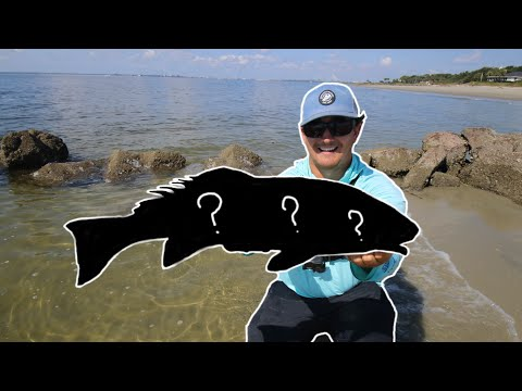 Surf Fishing With Live Mullet Catches A Stud In New Waters!