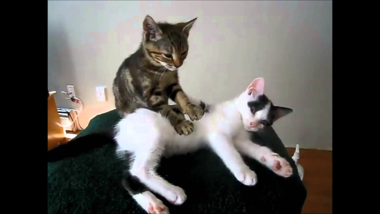 Cat Massage  VERY FUNNY  YouTube