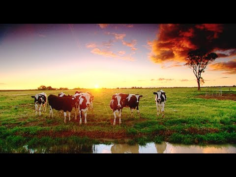 Dairy Australia - Murray