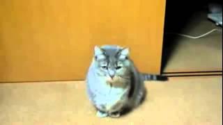 Что творят голодные котята ) - приколы про котов и котят)))