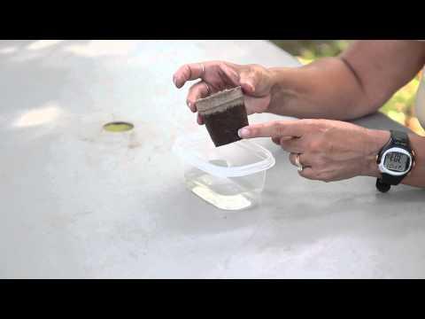 How to Germinate Begonias : Begonias