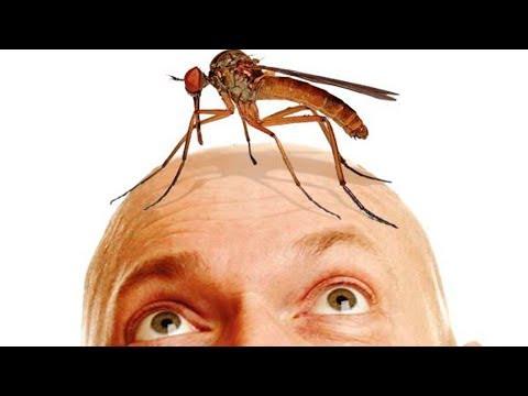 Вопрос: Почему комары кусают несколько раз?