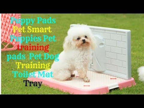 Puppy Pads Pet Smart // Puppies Pet training pads // Pet Dog Training Toilet Mat Tray
