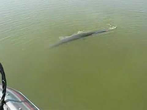Gar fishing tennessee river youtube for Buy tennessee fishing license