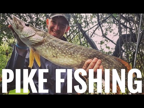 PIKE FISHING - The River Stour