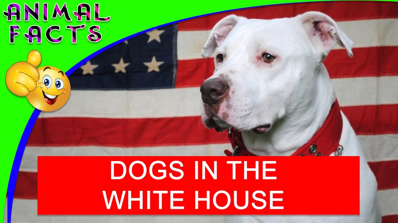 10 Dogs that Lived in the White House (President Dogs) #Dog #Whitehouse - Animal Facts