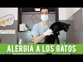 Alergia A Los Gatos   Causas, Síntomas y Consejos