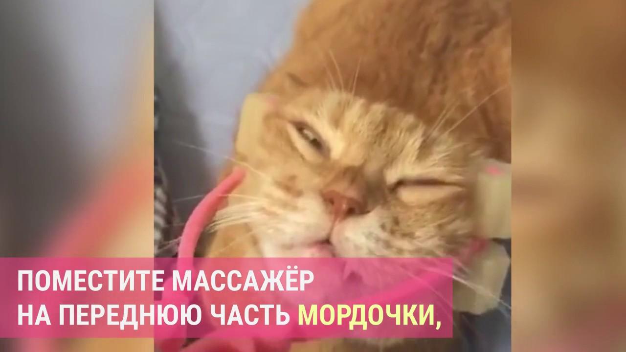 Кот на массажере