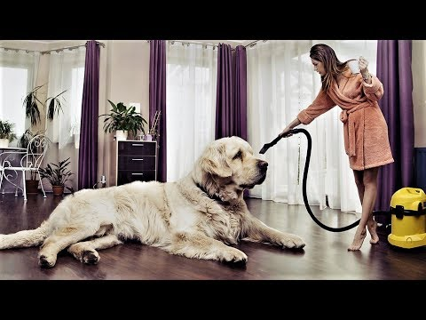 20 BIGGEST Dog Breeds in the World