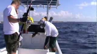 Jigging Playa del Carmen Mexico 2012 the Movie