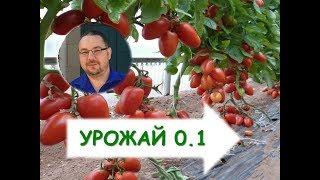 Выращивание томатов  в теплицах(выращивание томатов помидоров в теплицах, открытый день поля в теплицах у Сергея Гавеловского., 2015-03-23T16:20:20.000Z)