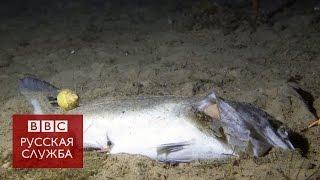 Что происходит с мертвой рыбой на дне океана - BBC Russian