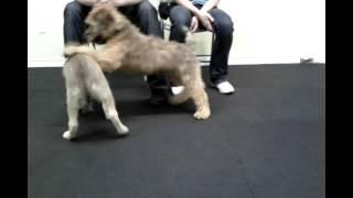 Puppy Socialization Class Toronto