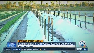 Farmers bracing for possible record breaking cold