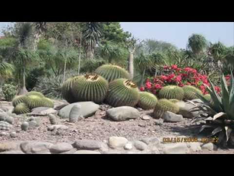 Cactus, suculant garden