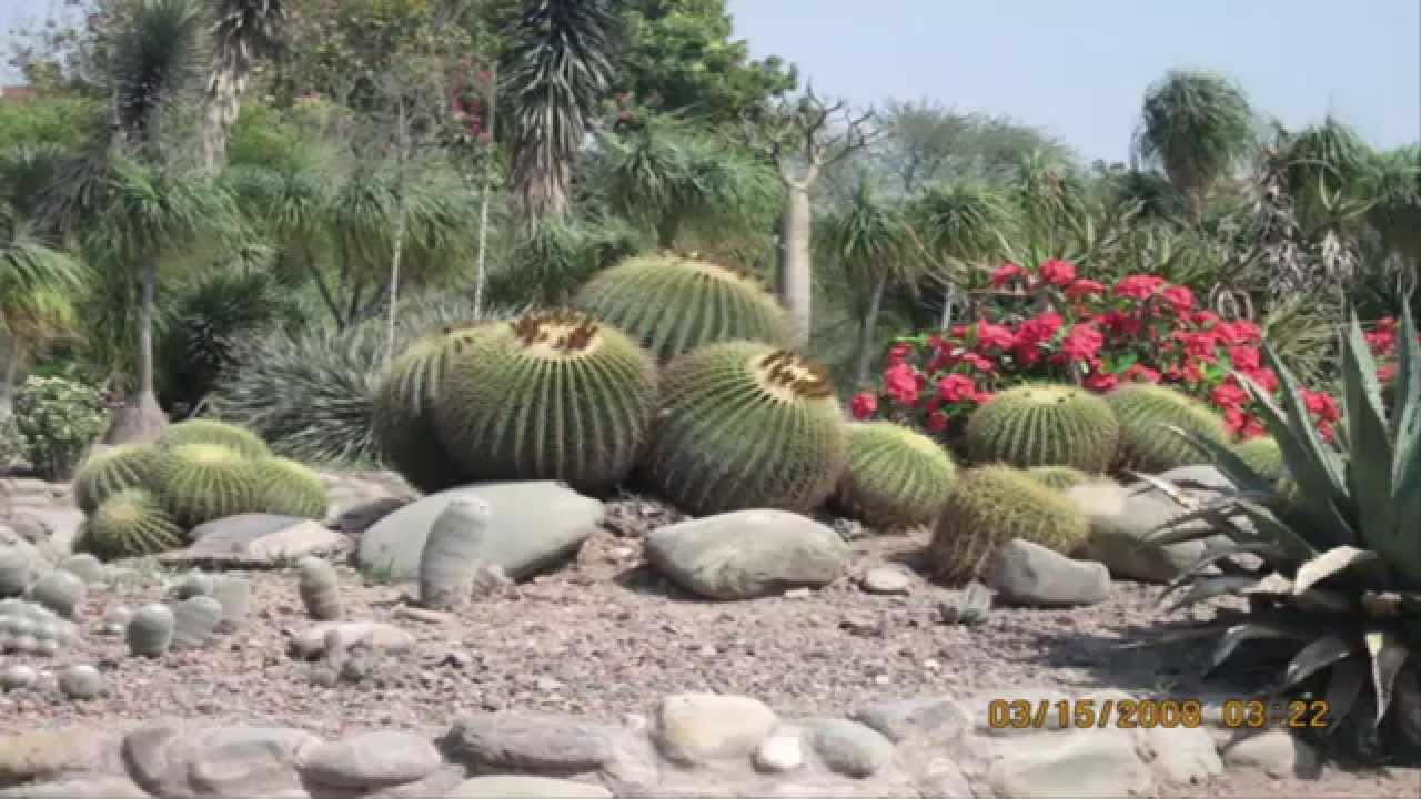 Garden ideas cactus rock garden ideas youtube for Cactus garden designs