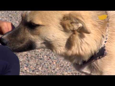 Dog Life Almaty Kazakhstan