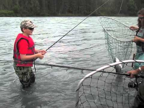 Young kid hooks up and gets his limit of sockeye salmon on for Kenai river fish counts